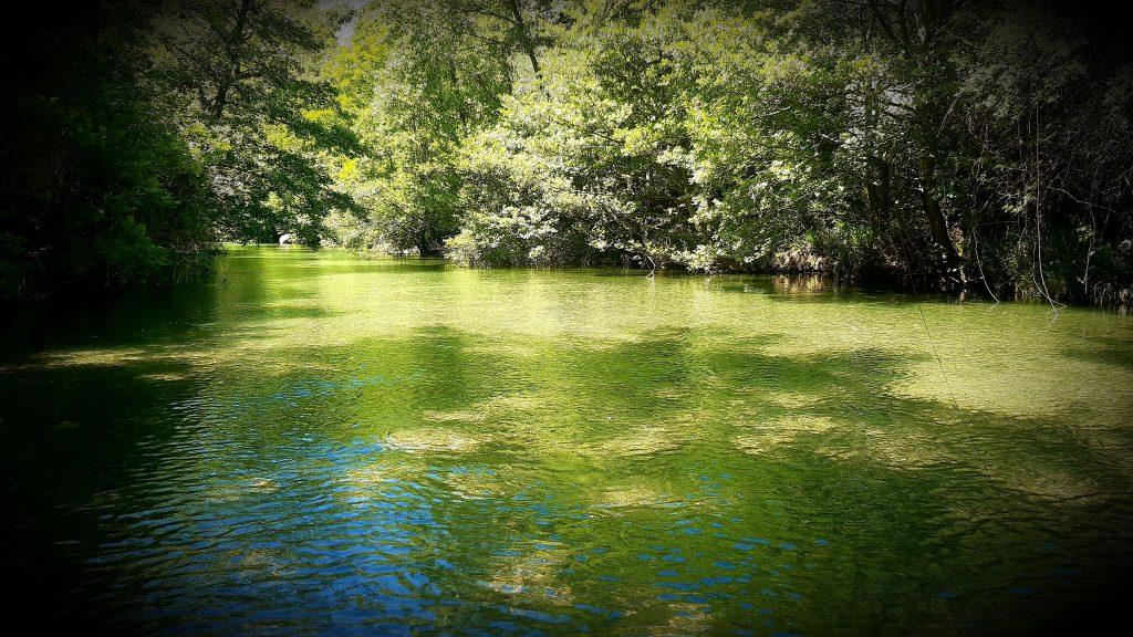 la Vis, rivière mythique de la pêche à la mouche dans l'Hérault