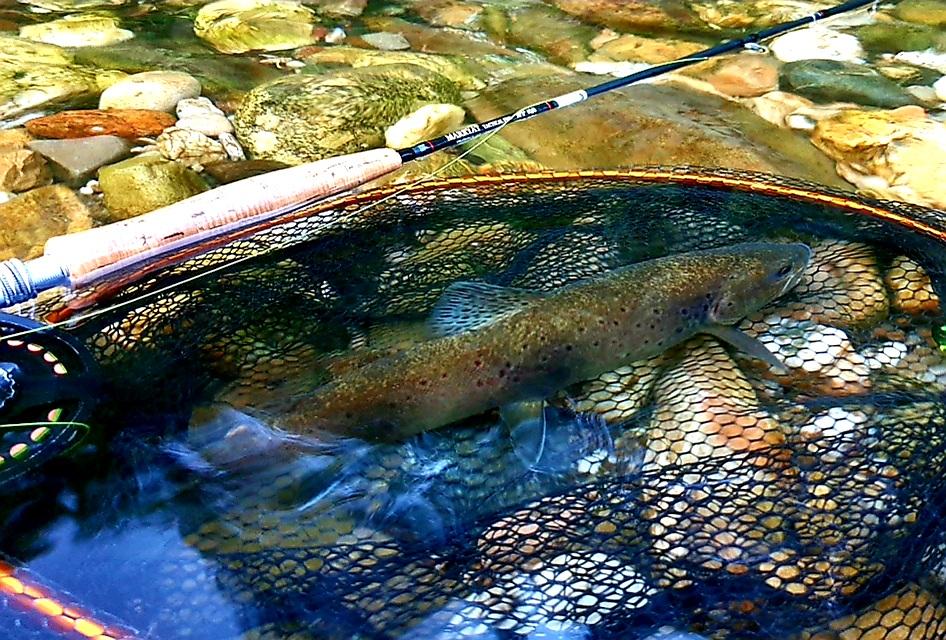 Le Tarn , rivière déale pour pêcher à la mouche en sèche lors des éclosions